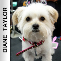 Pet Products Dazzle at SuperZoo 2014