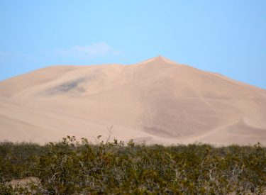 Big Dune rising above the creosote bushes.Photo by Osie Turner