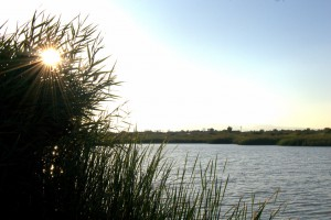 One of the many ponds found throughout the Wetlands Park.