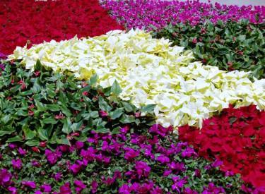 A Flower Garden in Crystals