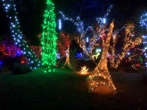 Holiday Lights at the Cactus Gardens - Living Las Vegas