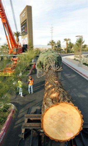 Imagine decorating a 109 foot tree in only one week! (courtesy of M Resort)