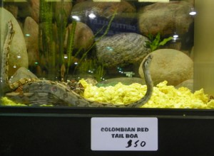 Snakes anyone?<br><em>Photo by Diane Taylor</em>