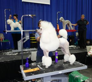 Grooming competitions are a staple at SuperZoo.