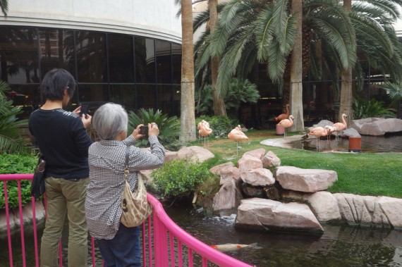 Of course the Flamingo Las Vegas Wildlife Habitat would feature flamingos -- pink Chilean Famingos that are the subjects of many visitor pictures.  Photo by Diane Taylor