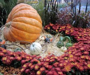 This pumpkin is 632 lbs