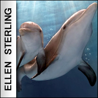 Movies: Dolphin Tale 2