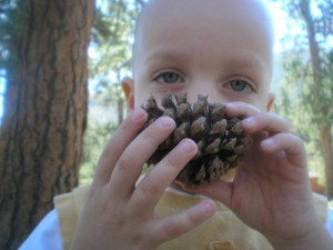 My son discovers a pinecone on Mount Charleston.